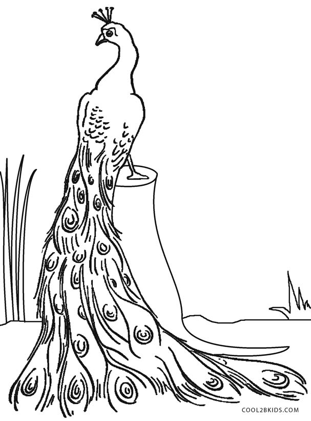 coloring pages of peacocks - Peacock Coloring Pages