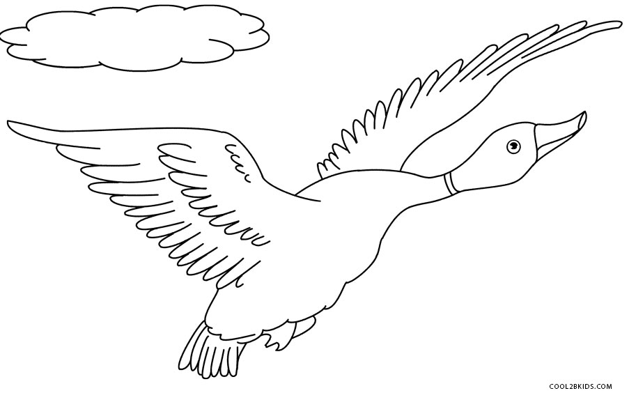 Printable Duck Coloring Pages For Kids Cool2bkids