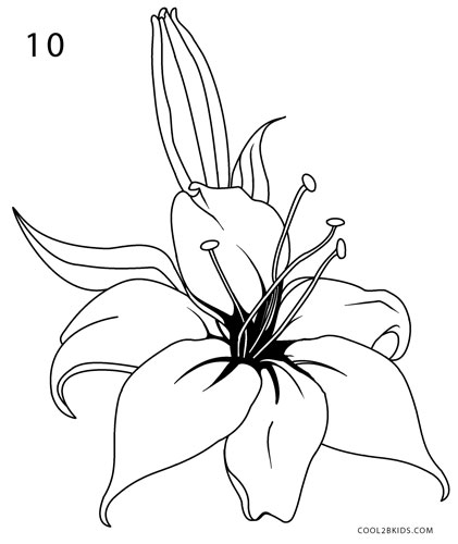 How To Draw A Lily Step By Step Pictures