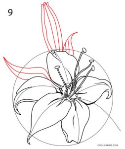 How to Draw a Lily Step 9