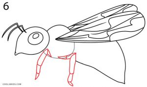 How to Draw a Bee Step 6
