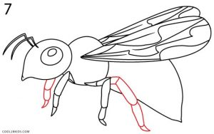 How to Draw a Bee Step 7