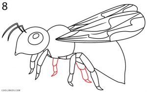 How to Draw a Bee Step 8