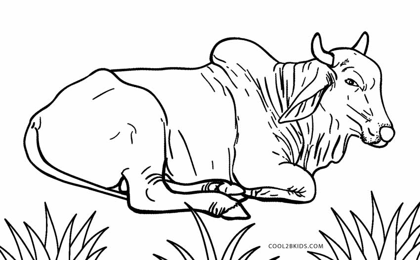 printable cow coloring pages - photo#27