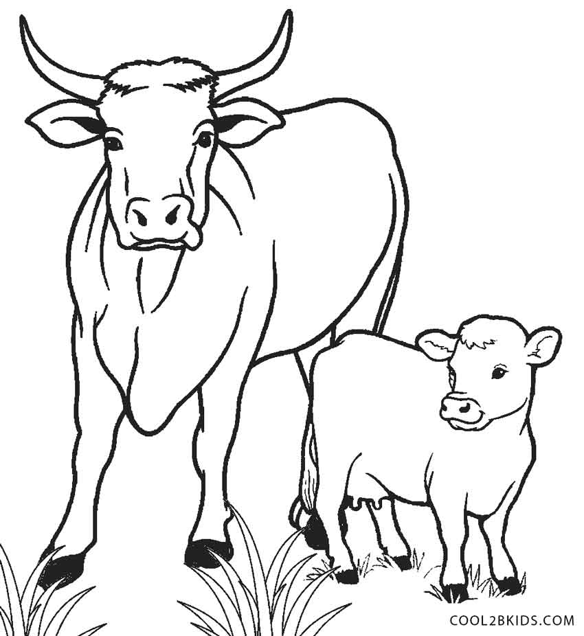 printable animal coloring pages calf | Free Printable Cow Coloring Pages For Kids | Cool2bKids