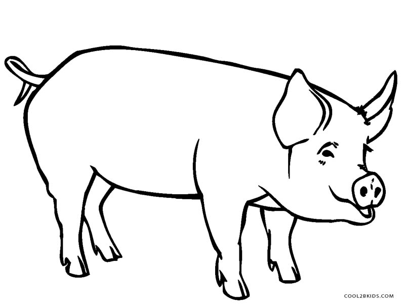 graphic about Printable Pig Coloring Pages identify Totally free Printable Pig Coloring Webpages For Youngsters Neat2bKids