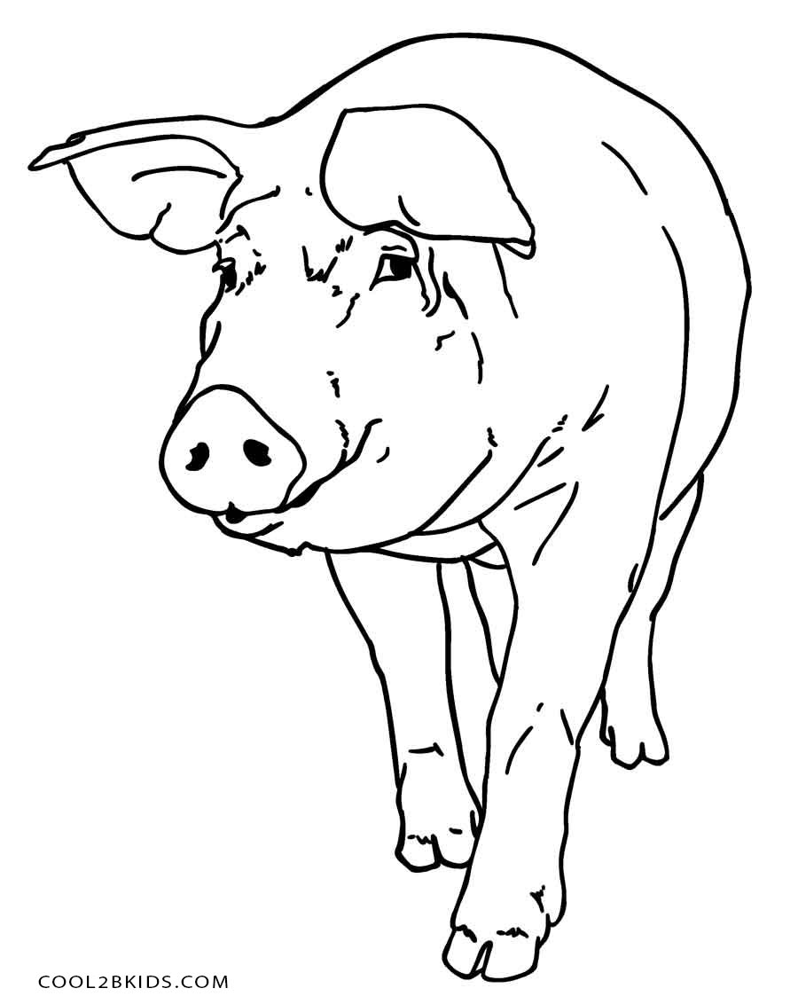 Coloring Pages Of Pigs