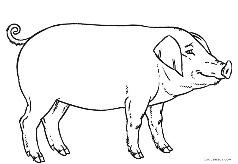 free pig coloring pages - photo#20