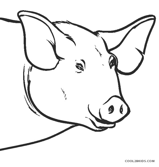 Line Drawing Of A Pig Face : Coloring pages of pig faces page