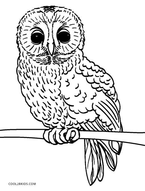 Free Printable Owl Coloring Pages For Kids | Cool9bKids