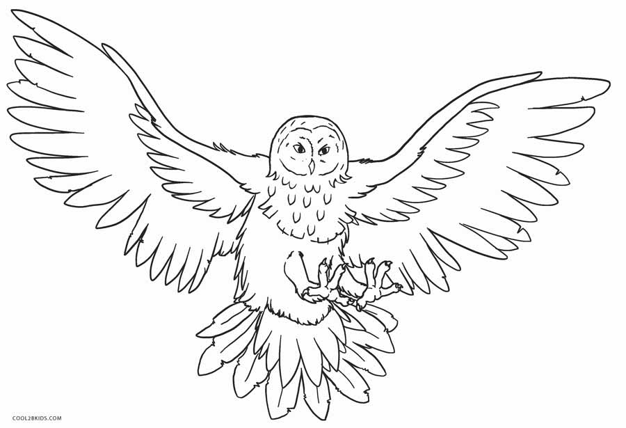 Coloring Pages Printible Free Owls