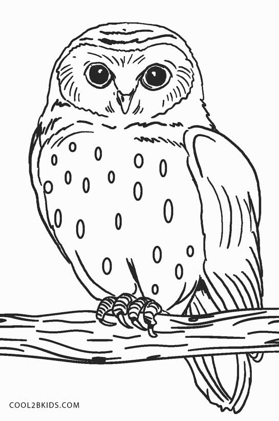 owl coloring pages
