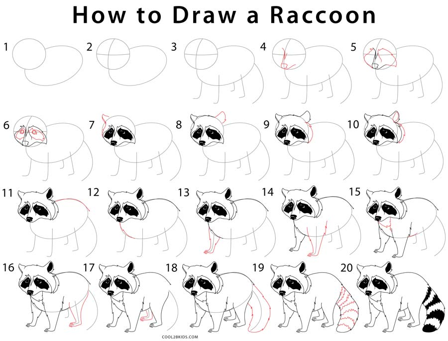 How to Draw a Raccoon (Step by Step Pictures) | Cool2bKids Raccoon Drawing Easy