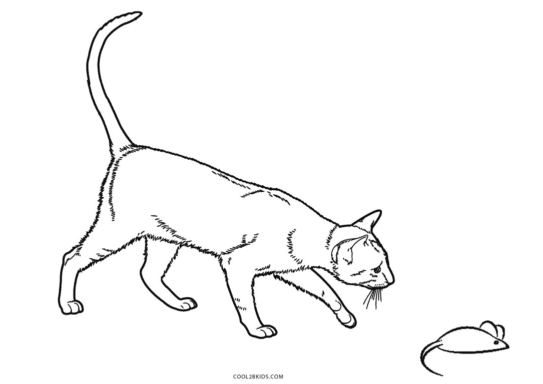 cat pages for coloring - photo#29