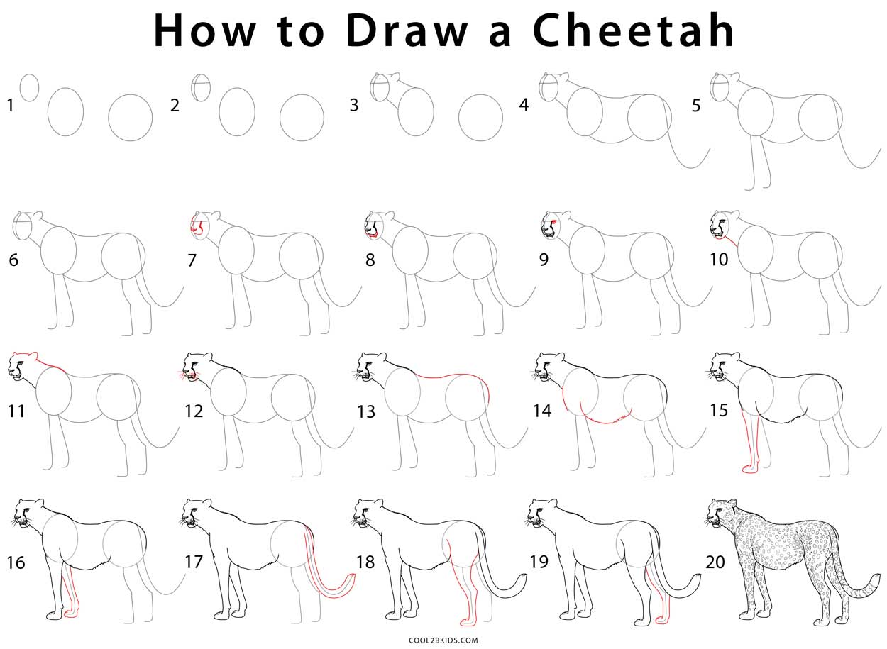 How to draw a cheetah step by step pictures cool2bkids for Step by step drawing websites