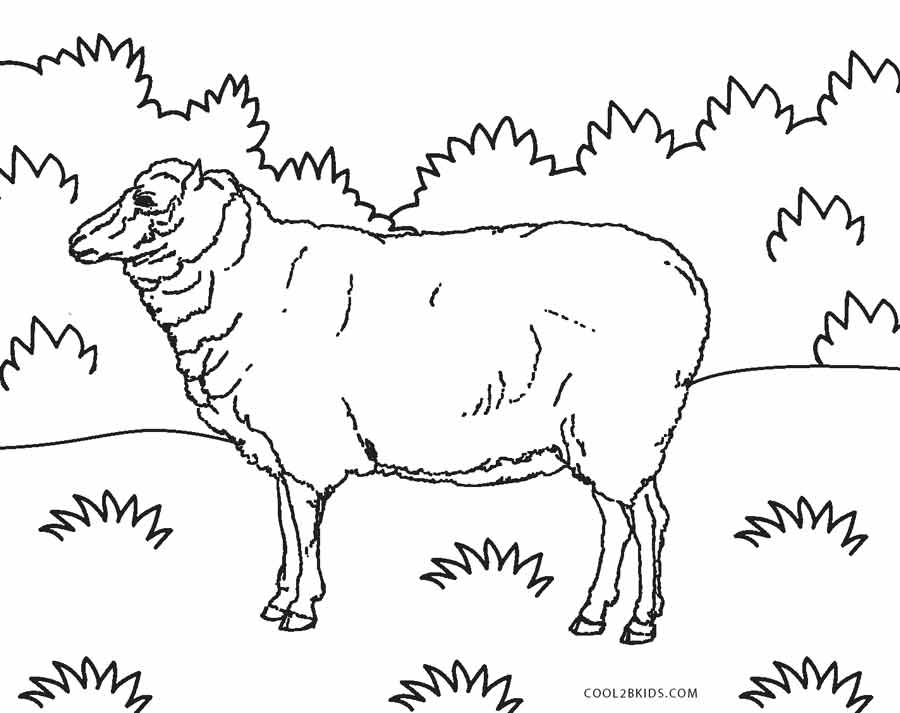 coloring pages of sheep - Sheep Coloring Page