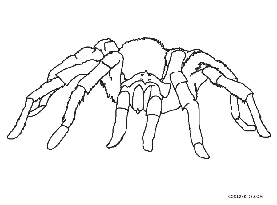 Free Printable Spider Coloring