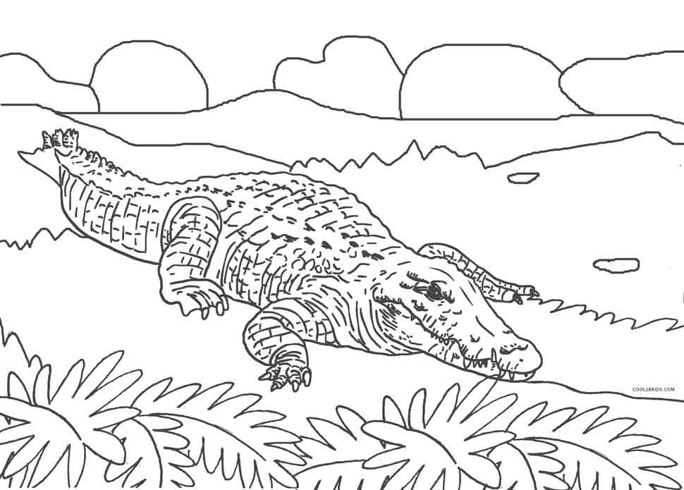 alligator coloring pages free - photo#17