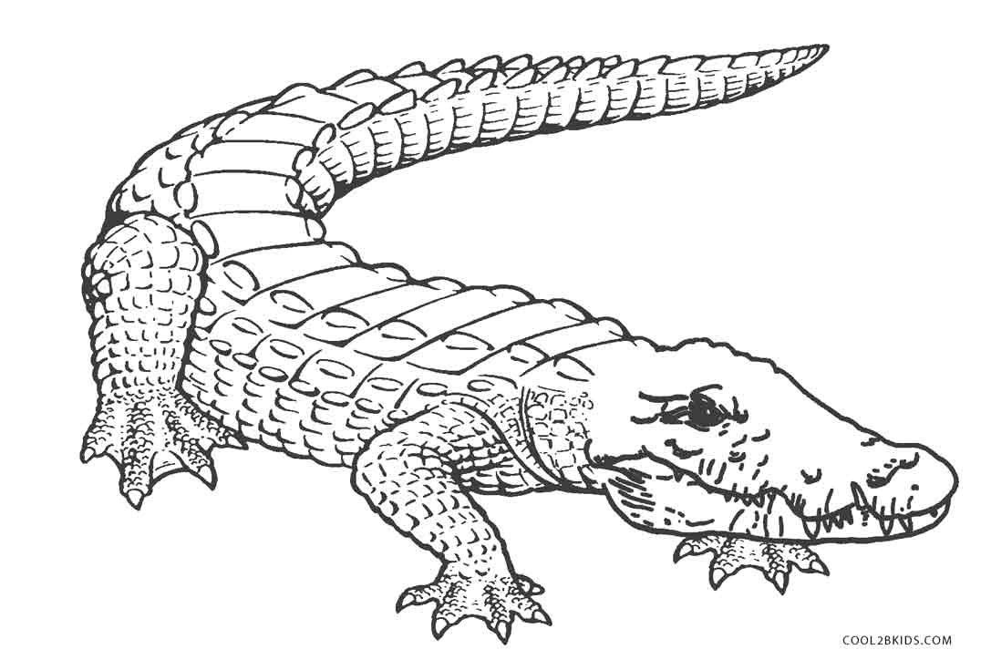 Free printable alligator coloring pages for kids cool2bkids for Crocodile coloring page