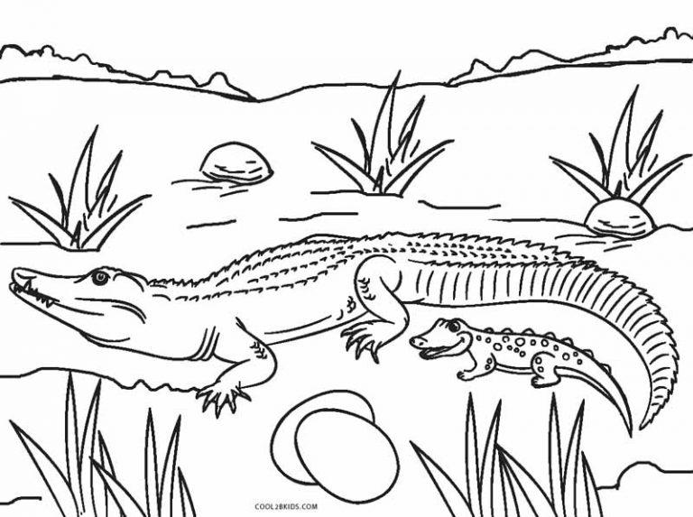 baby alligator color