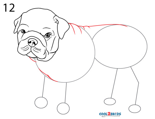 how to draw a bulldog step by step pictures cool2bkids