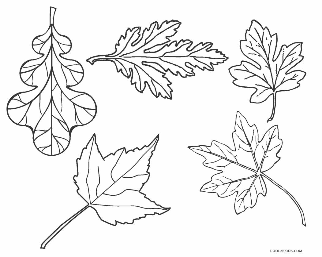 It's just an image of Universal Fall Leaf Coloring Pages