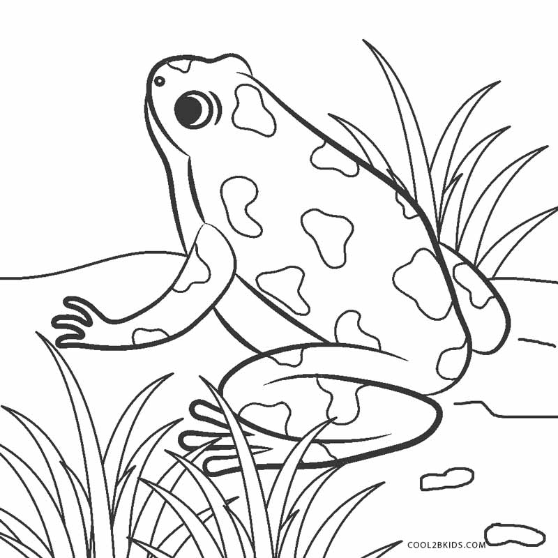 Free Printable Frog Coloring Pages