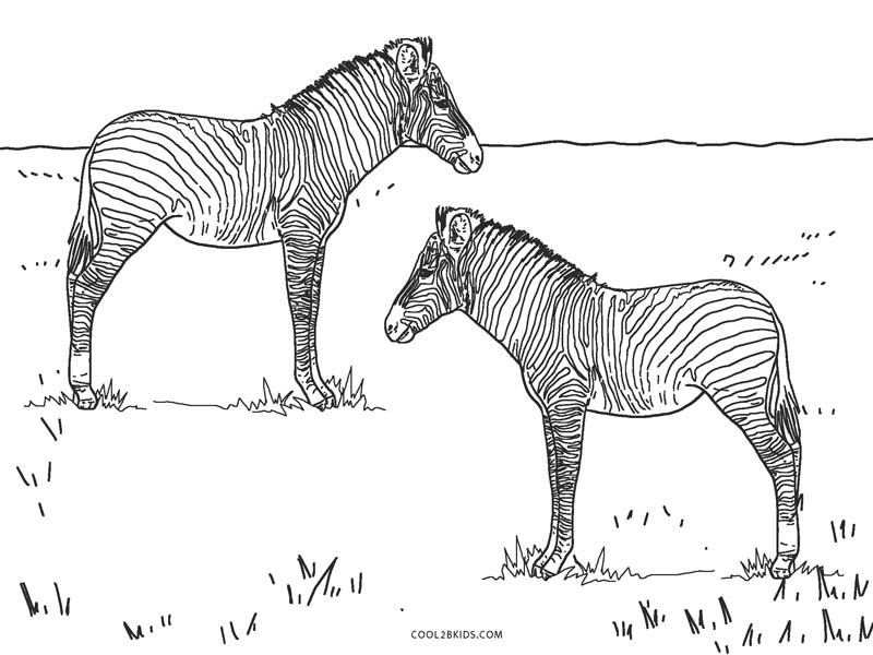 Baby zebra | Zebra coloring pages, Precious moments coloring pages ... | 600x800