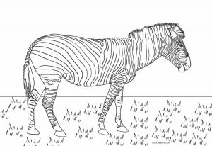 Free Printable Zebra Coloring Pages For Kids Cool2bkids