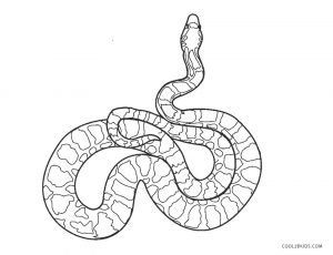 Free Printable Snake Coloring Pages For Kids Cool2bkids