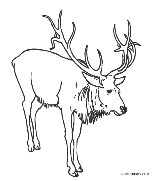 Deer Head Coloring Pages - Get Coloring Pages | 620x533