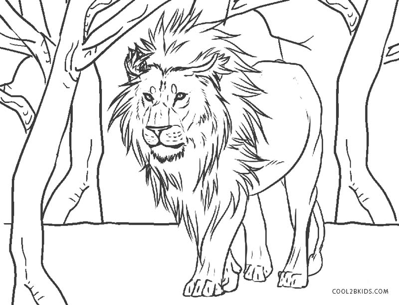 free coloring pages of lions - photo#15