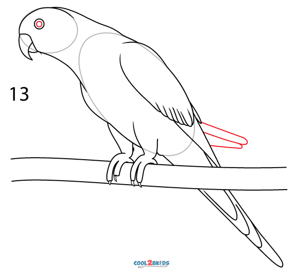 How To Draw a Parrot (Step by Step Pictures)