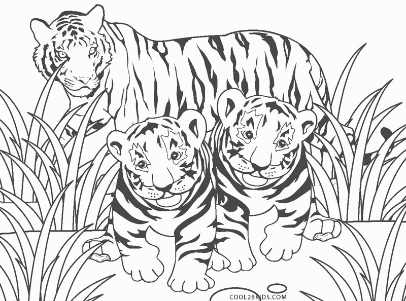 Free Printable Tiger Coloring Pages For Kids   594x800