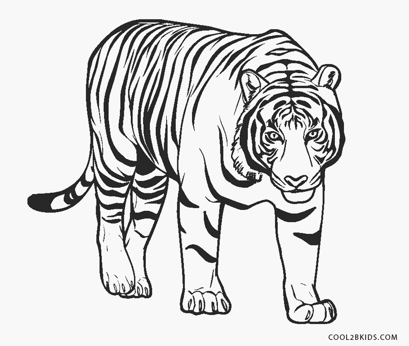 Coloring Pages. Wild Animals. Smiling Mother Tiger With Her Little ... | 678x800