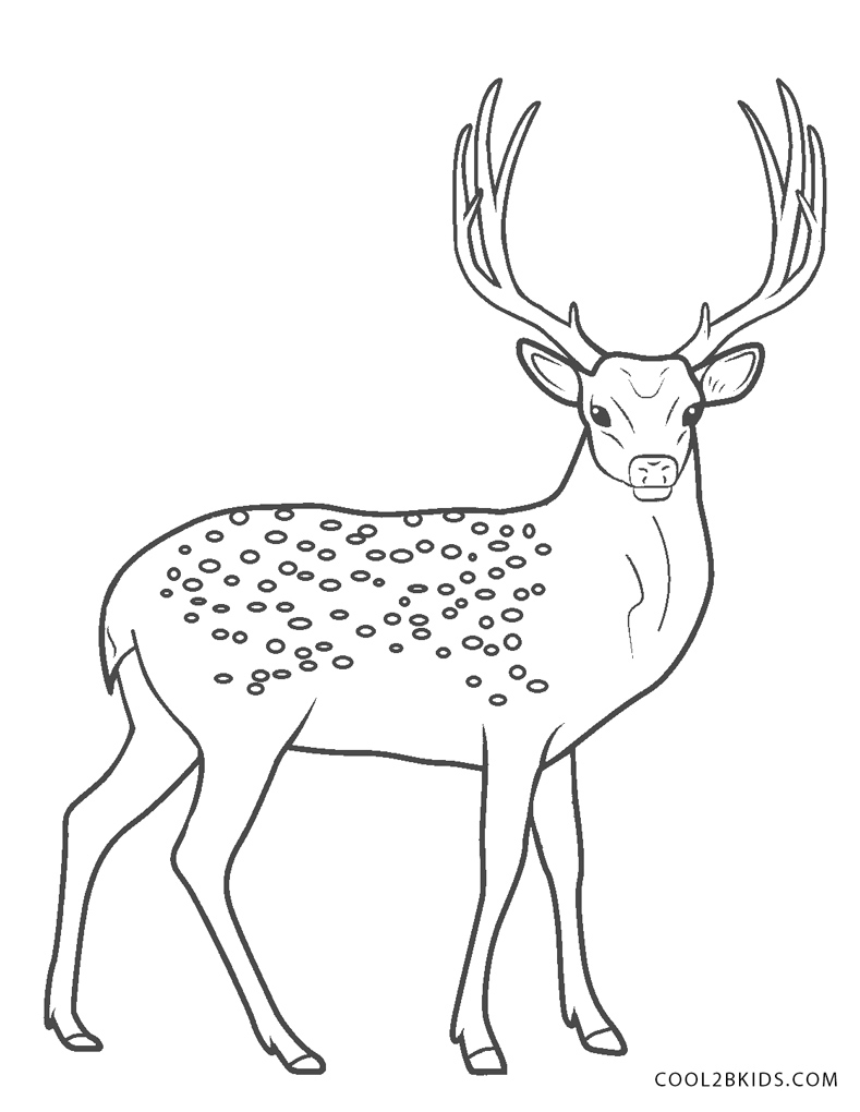 Free Printable Deer Coloring Pages For Kids | Cool2bKids