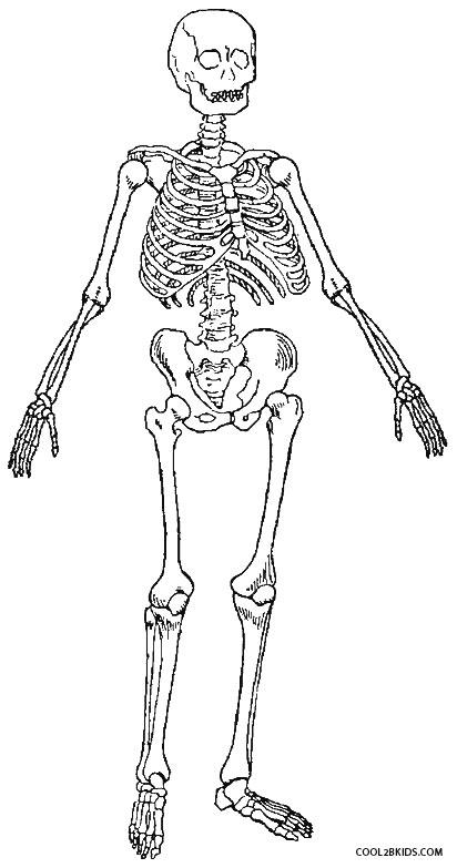 ausmalbilder skelett  malvorlagen kostenlos zum ausdrucken