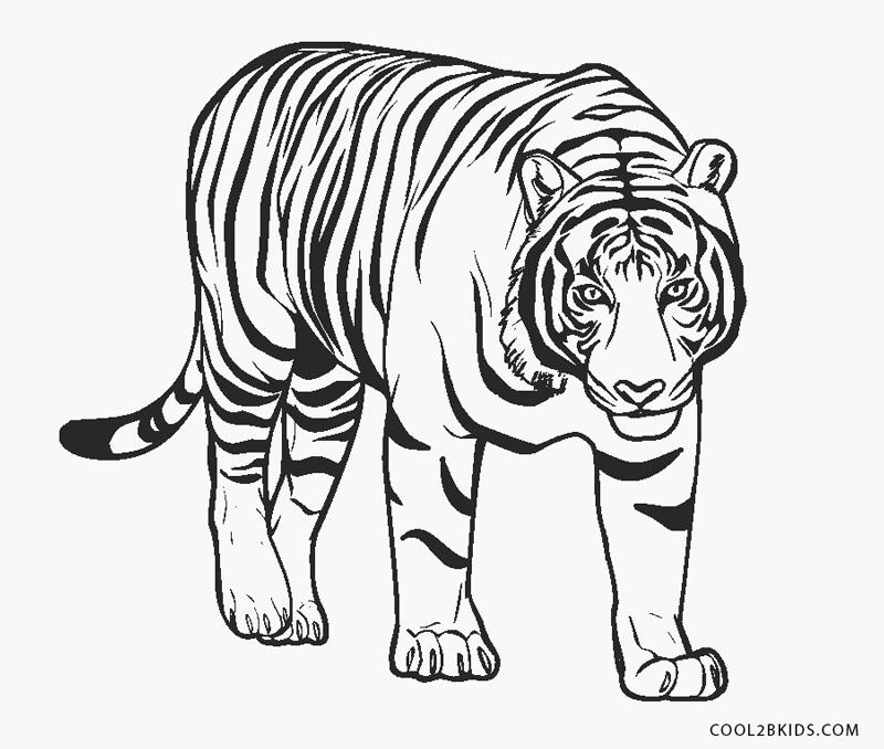 Tiger ausmalbilder kostenlos Kostenlose druckbare
