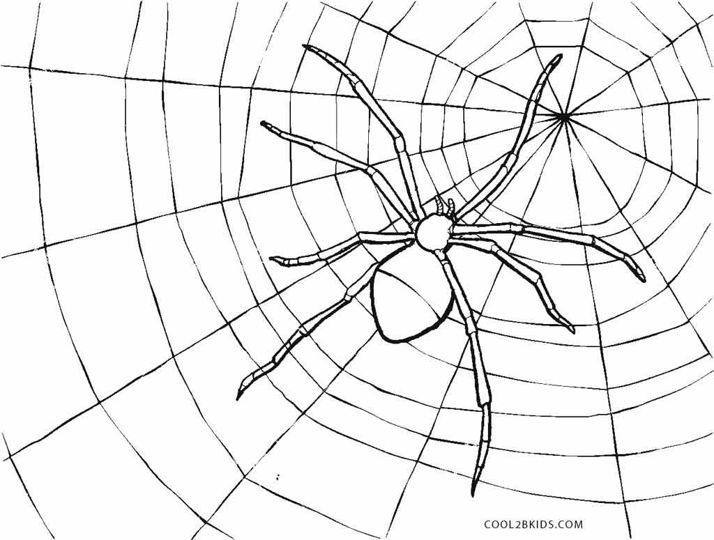 Ausmalbilder Spinne Malvorlagen Kostenlos Zum Ausdrucken