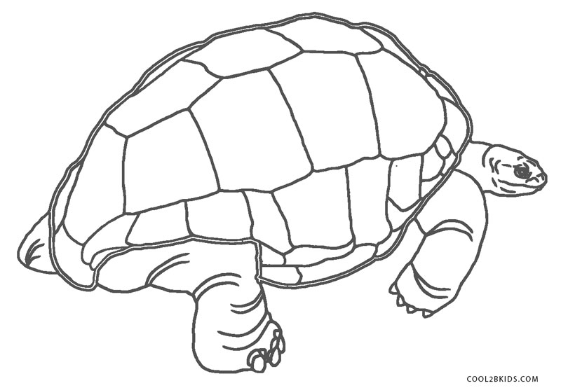 ausmalbilder schildkröte  malvorlagen kostenlos zum