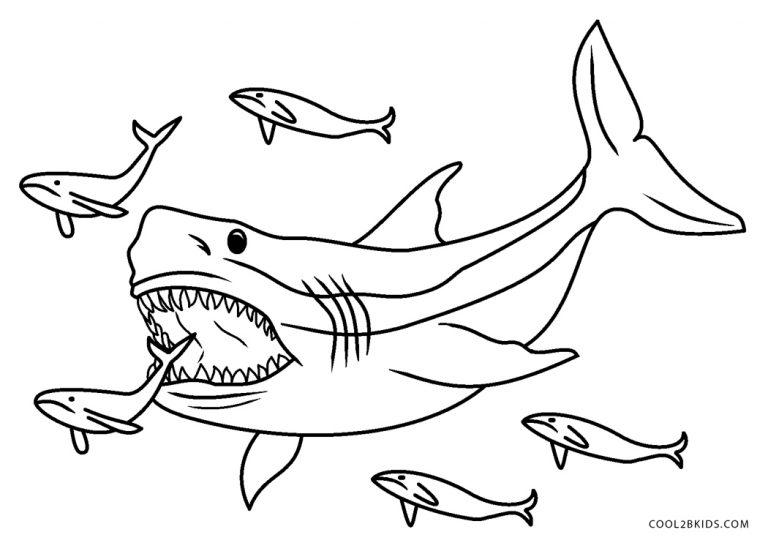 ausmalbilder hai  malvorlagen kostenlos zum ausdrucken